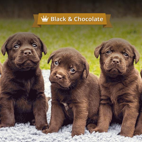 icreative.com.ua_black&chocolfte_preview